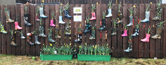 wellngton boots planted with daffodils on a wooden fence